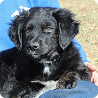 Adopt A Pet :: Doc - Berkeley Heights, NJ