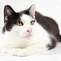 Adopt A Pet :: Penny - Kingston, ON