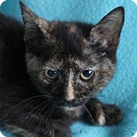 Adopt A Pet :: Raisin - Spring Valley, NY