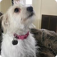 Adopt A Pet :: Emma - Simi Valley, CA