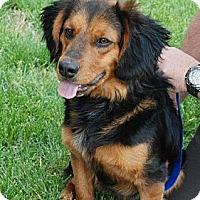 Adopt A Pet :: PeeWee - Albany, NY