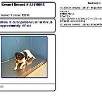 Adopt A Pet :: Female in Houston - Houston, TX