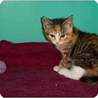 Adopt A Pet :: Jan - Secaucus, NJ