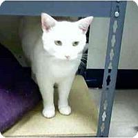 Adopt A Pet :: Aspen - Fort Lauderdale, FL