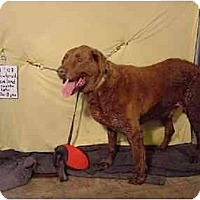 Adopt A Pet :: Cleveland/Pending - Zanesville, OH