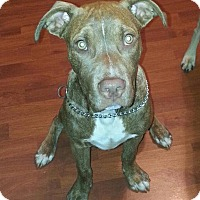Adopt A Pet :: Buddy - Medora, IN