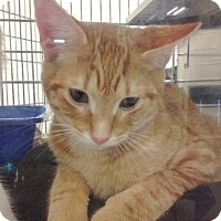 Adopt A Pet :: Ranger - Byron Center, MI