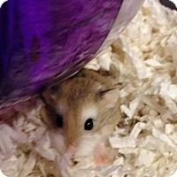 Adopt A Pet :: Olivia - Bensalem, PA