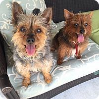 Adopt A Pet :: Mokie & Mindy - Chicago, IL