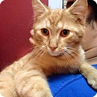 Adopt A Pet :: Evanston - New York, NY