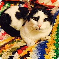 Adopt A Pet :: Lenny - Addison, IL