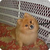 Adopt A Pet :: Remi - Memphis, TN