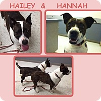 Adopt A Pet :: HAILEY & HANNAH~OBEDIENCE TR. - Dallas, NC