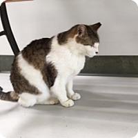 Adopt A Pet :: Dance - Diamond Springs, CA