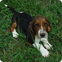 Adopt A Pet :: Matilda - Manchester, NH