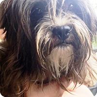 Adopt A Pet :: Pixie - Oswego, IL