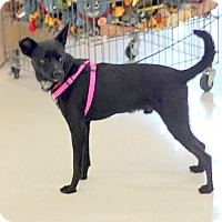 Terrier (Unknown Type, Small) Mix Dog for adoption in Concord, North Carolina - Victor