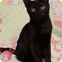 Adopt A Pet :: MOONSHADOW - Highland, IN