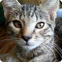 Adopt A Pet :: Tito - Denver, CO