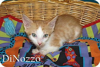 Domestic Shorthair Kitten for adoption in Jackson, Mississippi - DiNozzo