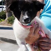 Adopt A Pet :: Frances - Adopted! - San Diego, CA