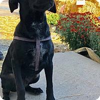 Adopt A Pet :: MAX - joliet, IL