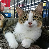 Adopt A Pet :: Arianna aka Corky - MARENGO, IL