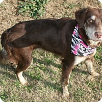 Adopt A Pet :: Gracie - Pilot Point, TX