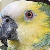 Adopt A Pet :: Emmy - Frederick, MD