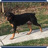 Adopt A Pet :: Crystal - Mechanicsburg, PA