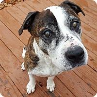 Adopt A Pet :: Waylon - Overland Park, KS