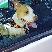 Adopt A Pet :: Cassidy - Raeford, NC