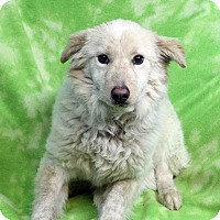 Adopt A Pet :: ADDIE - Westminster, CO