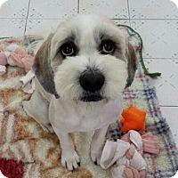 Adopt A Pet :: Achu - Fairfax, VA