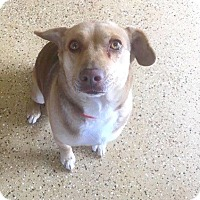 Adopt A Pet :: cloey - Marion, IN