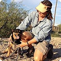 Adopt A Pet :: Rico - Thatcher, AZ
