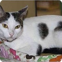 Adopt A Pet :: Mary - New Port Richey, FL