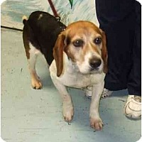 Adopt A Pet :: Martin - Novi, MI