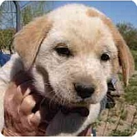 Adopt A Pet :: Jarvis - Phoenix, AZ