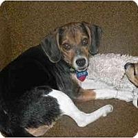 Adopt A Pet :: Patsy - Novi, MI