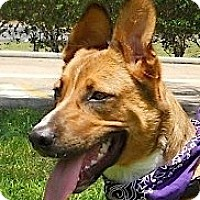 Adopt A Pet :: Zack - Kingwood, TX