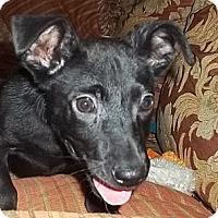 Adopt A Pet :: Eddie - Staunton, VA