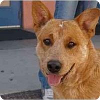 Adopt A Pet :: Foster - Phoenix, AZ