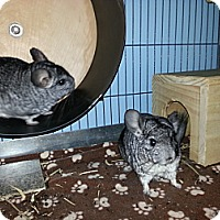 Adopt A Pet :: Milo & Otis - Jacksonville, FL