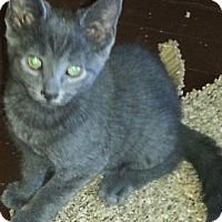 Adopt A Pet :: Zoe - brewerton, NY