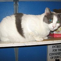 Adopt A Pet :: Abner - Coos Bay, OR