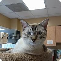 Adopt A Pet :: Gurley - Armuchee, GA