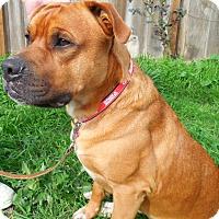 Adopt A Pet :: Winston Rohko - Woodland, CA