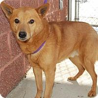 Adopt A Pet :: Wookie - Richmond, VA