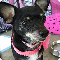 Adopt A Pet :: Stacy Mae - Lake Forest, CA